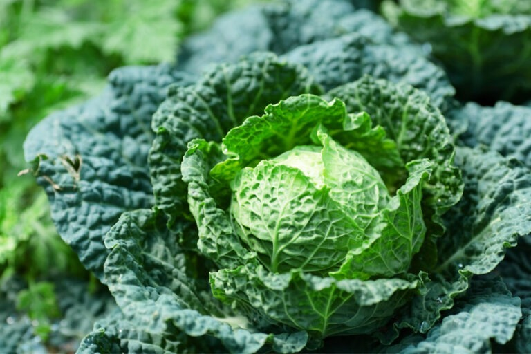 Grow Your Own Vegetables   Taste Lincolnshire