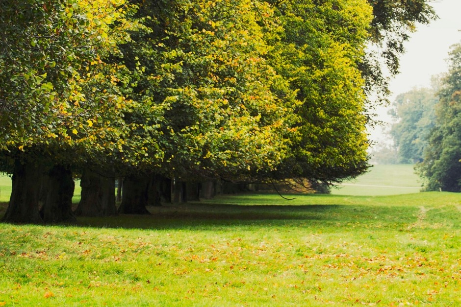 Green Parkland at Burghley House | South Kesteven