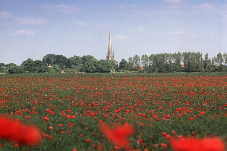 Poppy field in Lincolnshire