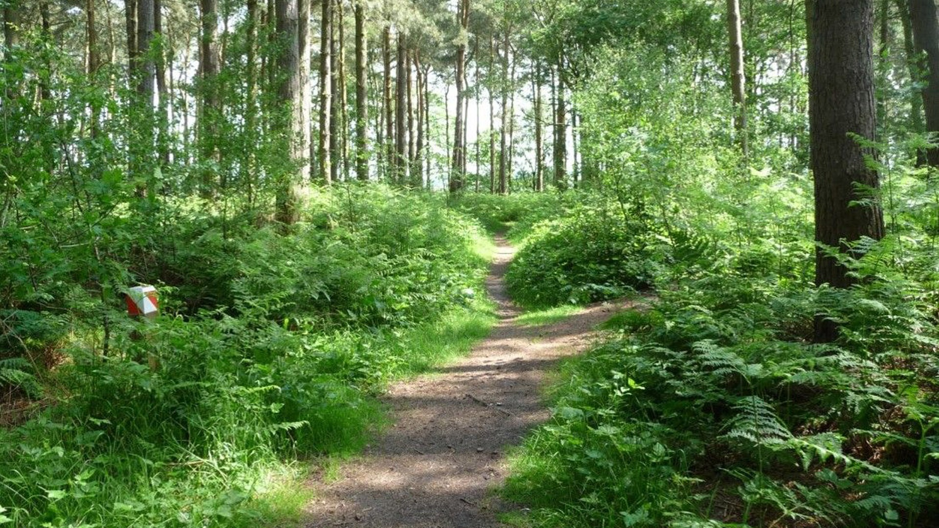 The Natural World of Lincolnshire Willingham Woods