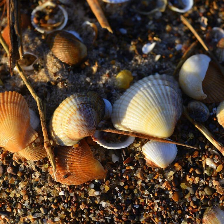 Sandilands Shells
