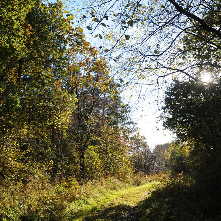 Lincolnshire Limewoods