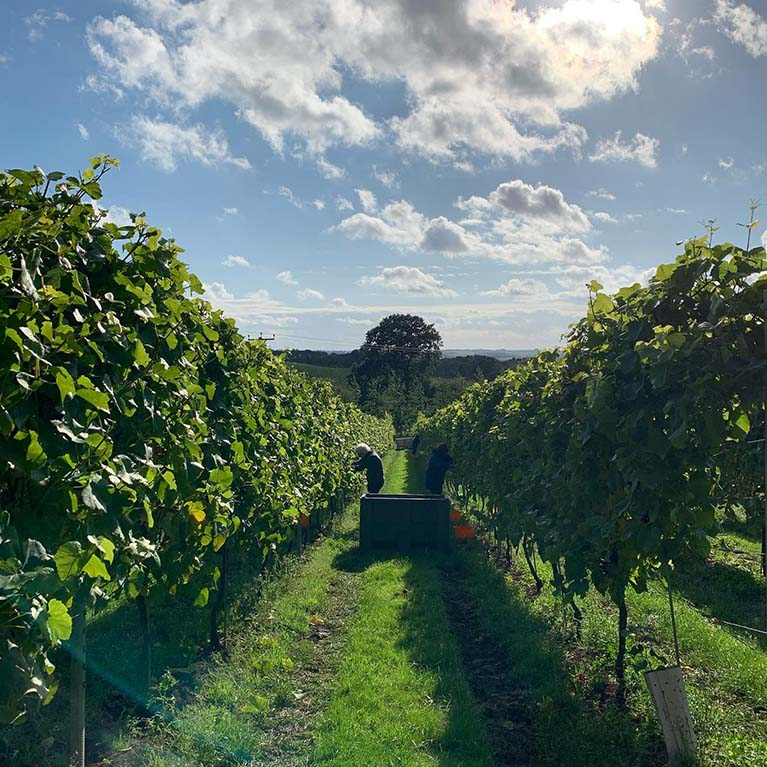 Ovens Farm Vineyard
