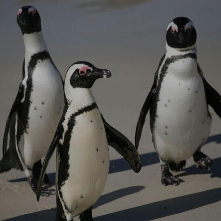 Penguins Natureland Seal Sanctuary