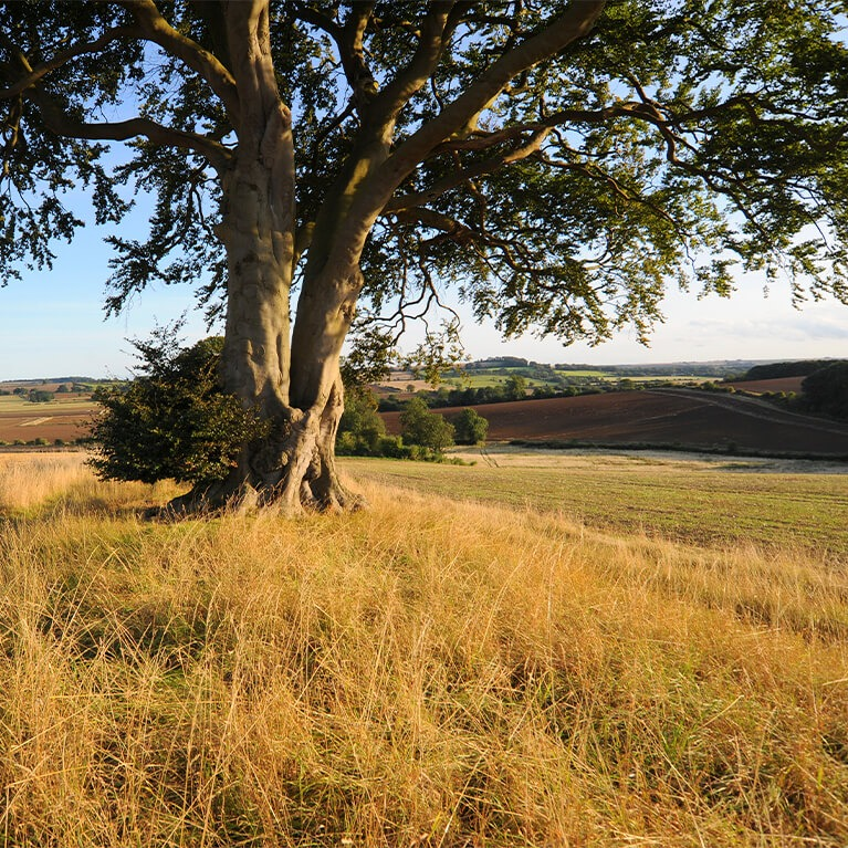 Red Hill Nature Reserve
