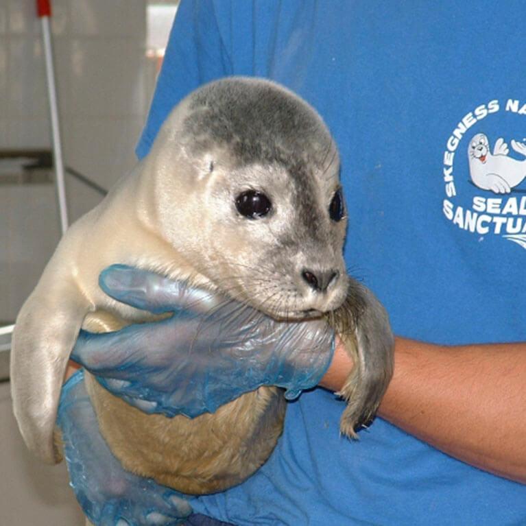 Seal Rehabilitation Natureland Seal Sanctuary