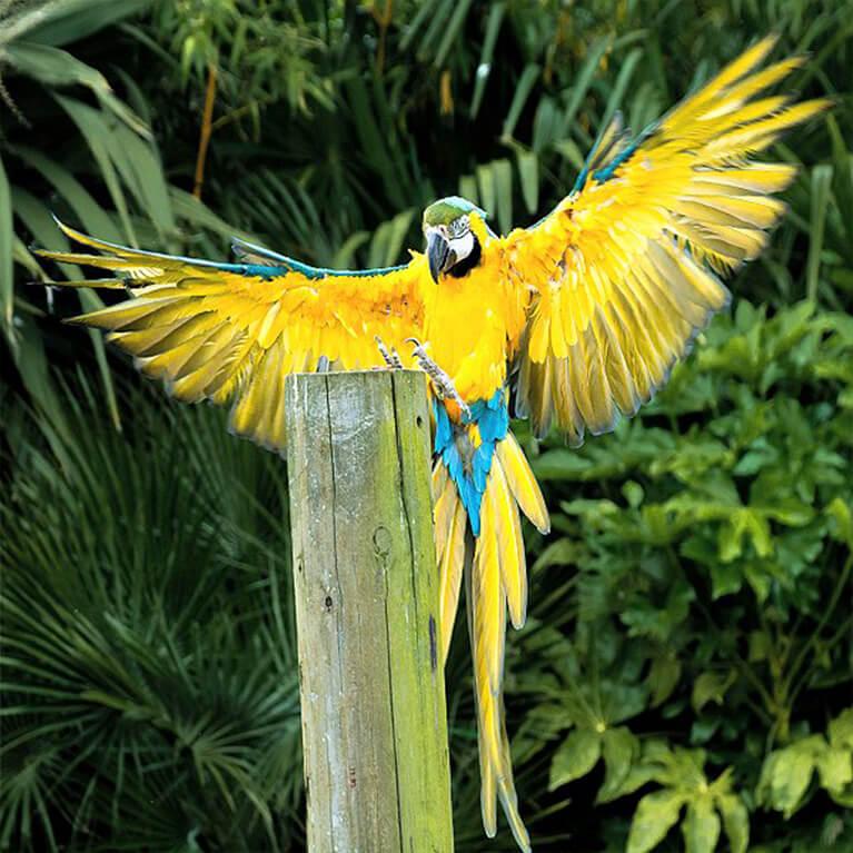 Woodside Wildlife Parrot
