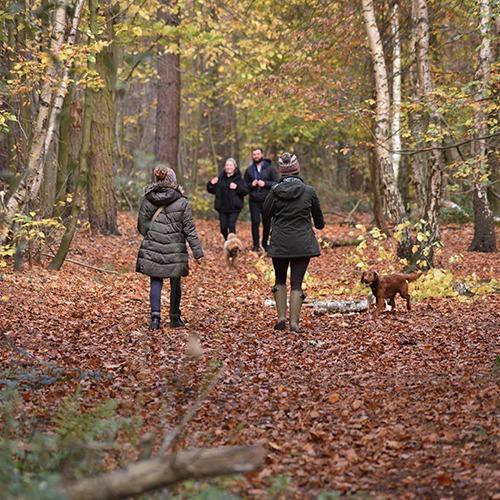 Willingham Woods