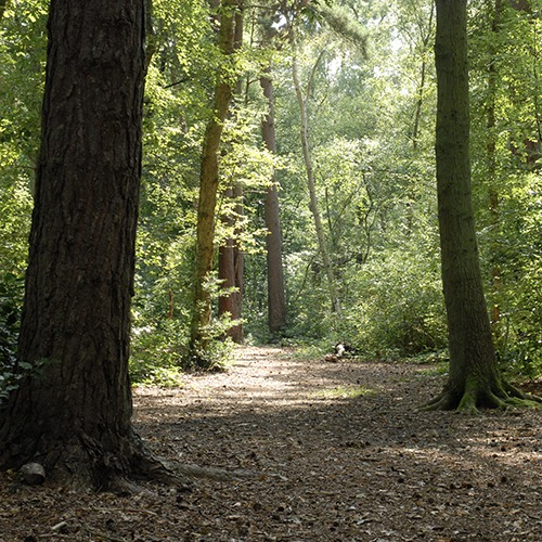 Woodhall Woods