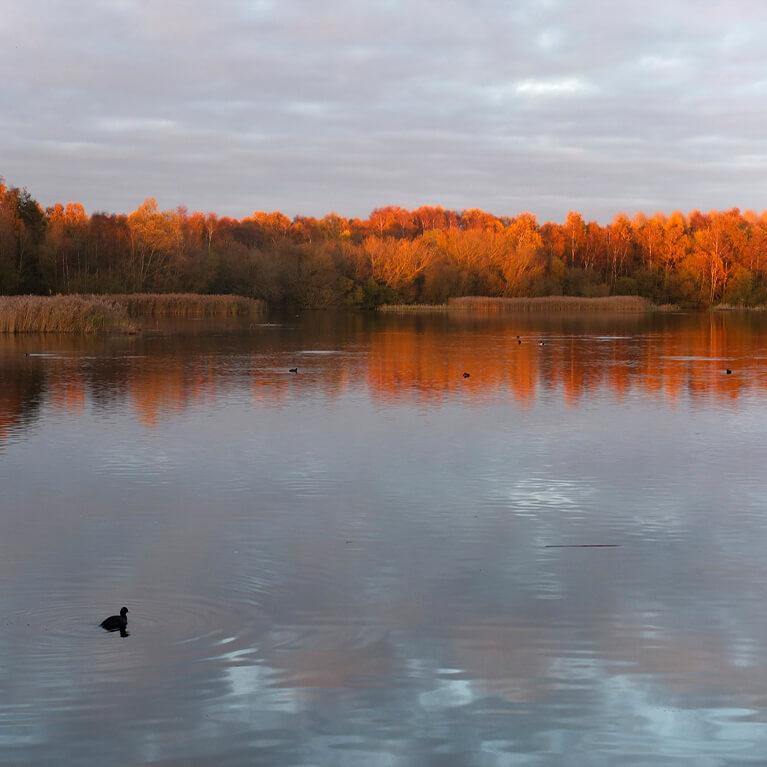 Grebe Lake Rachel Shaw