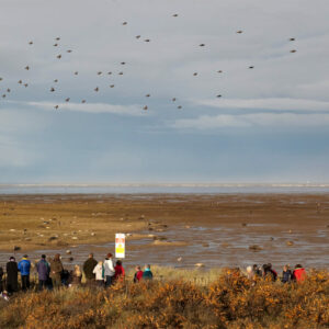 Donna Nook photographed by Rachel Shaw