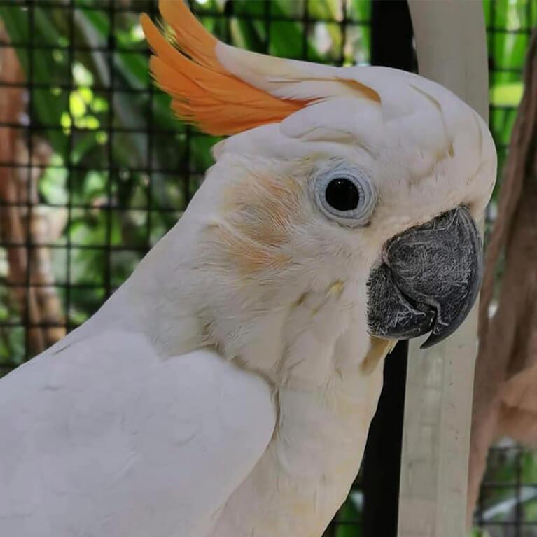 Jungle Zoo Parrot