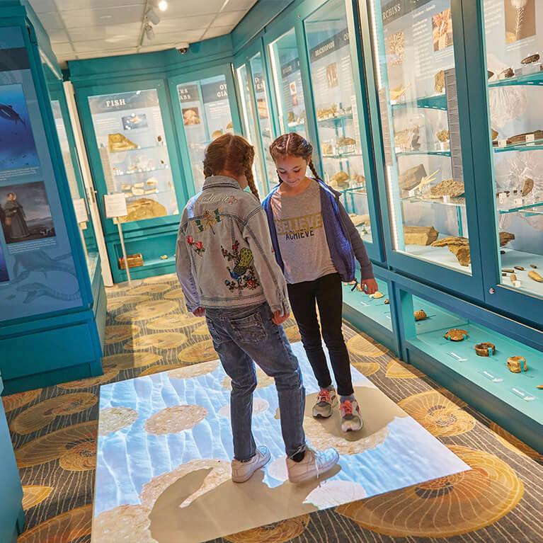 Jurassic Sea North Lincolnshire Museum