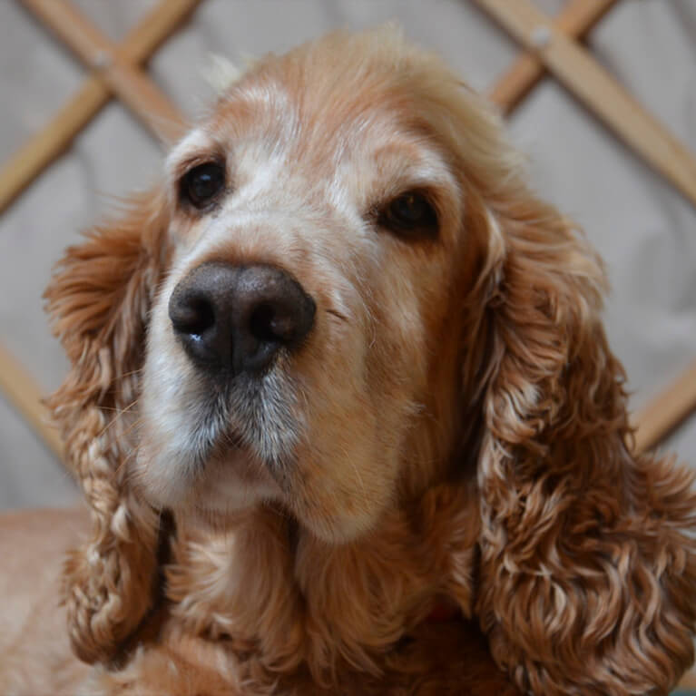 Stamford Meadows Glamping Dog Friendly