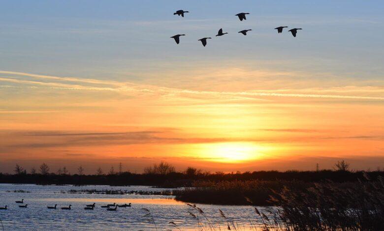 Frampton Marsh birds