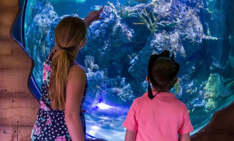 Skegness Aquarium Close Encounters