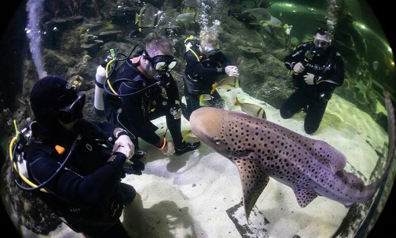 Skegness Aquarium Diving Experiences