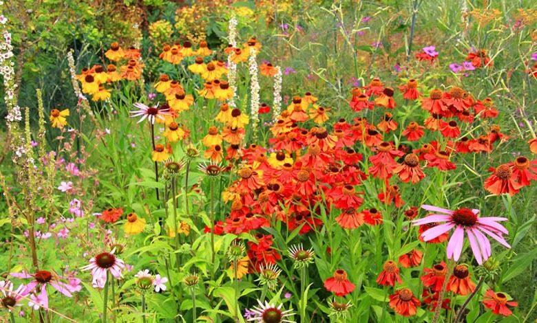 Elsham Gardens